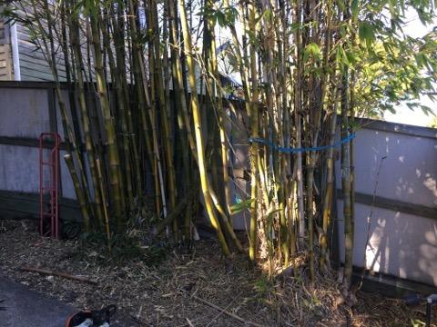 www.bambooremovalbrisbane.com.au/newmarket