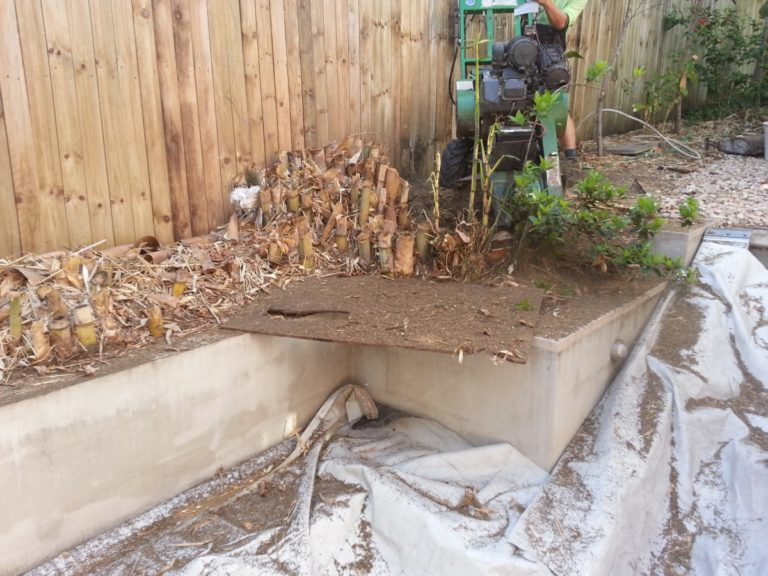 Bamboo Removal Brisbane
